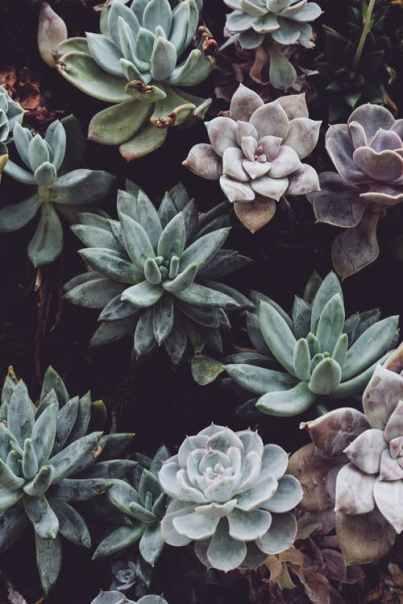pex botany